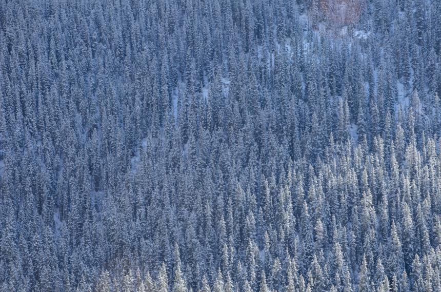 Alberta Canada roadtrip Jasper 2